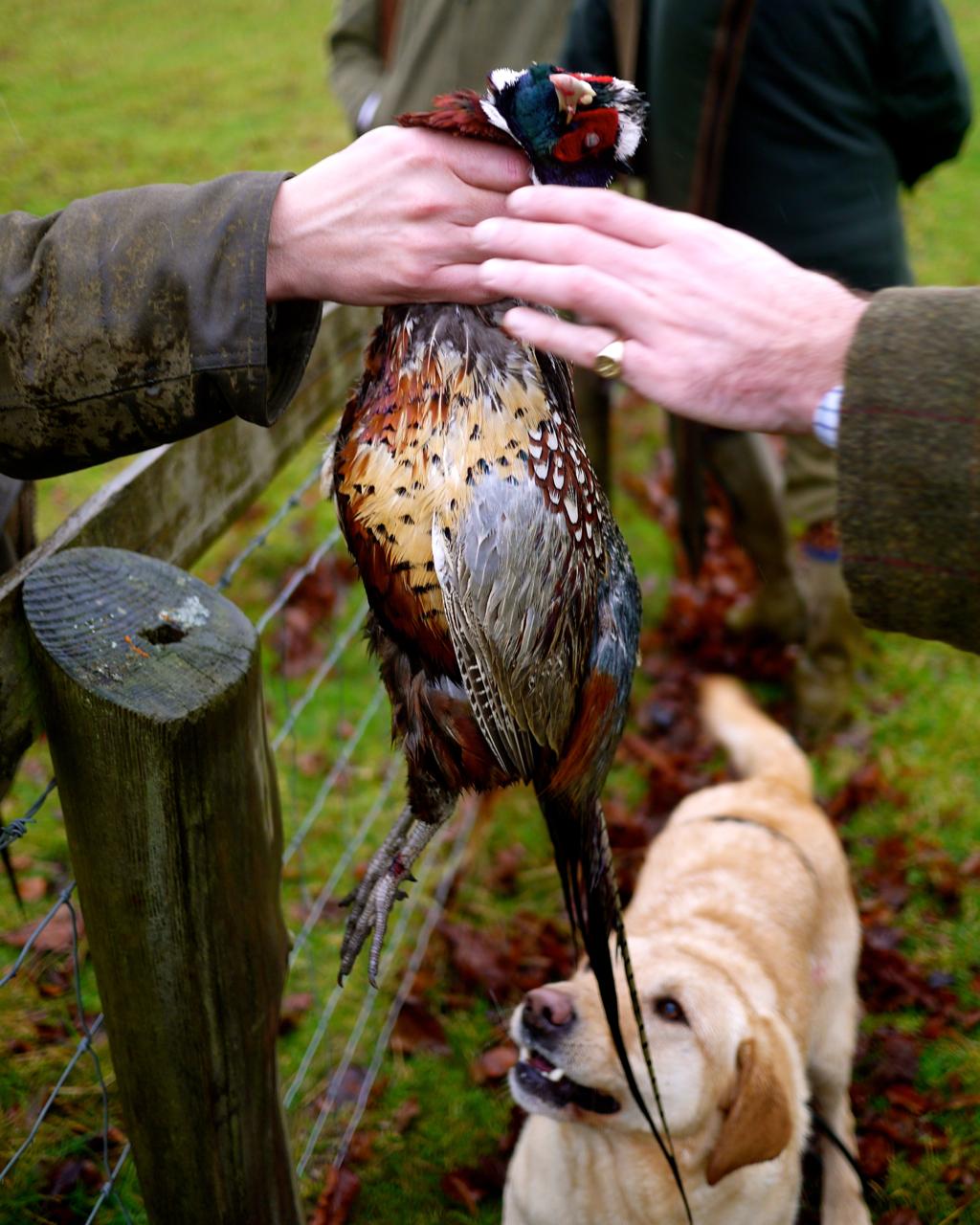 Pheasant Shoot Godsavethescene