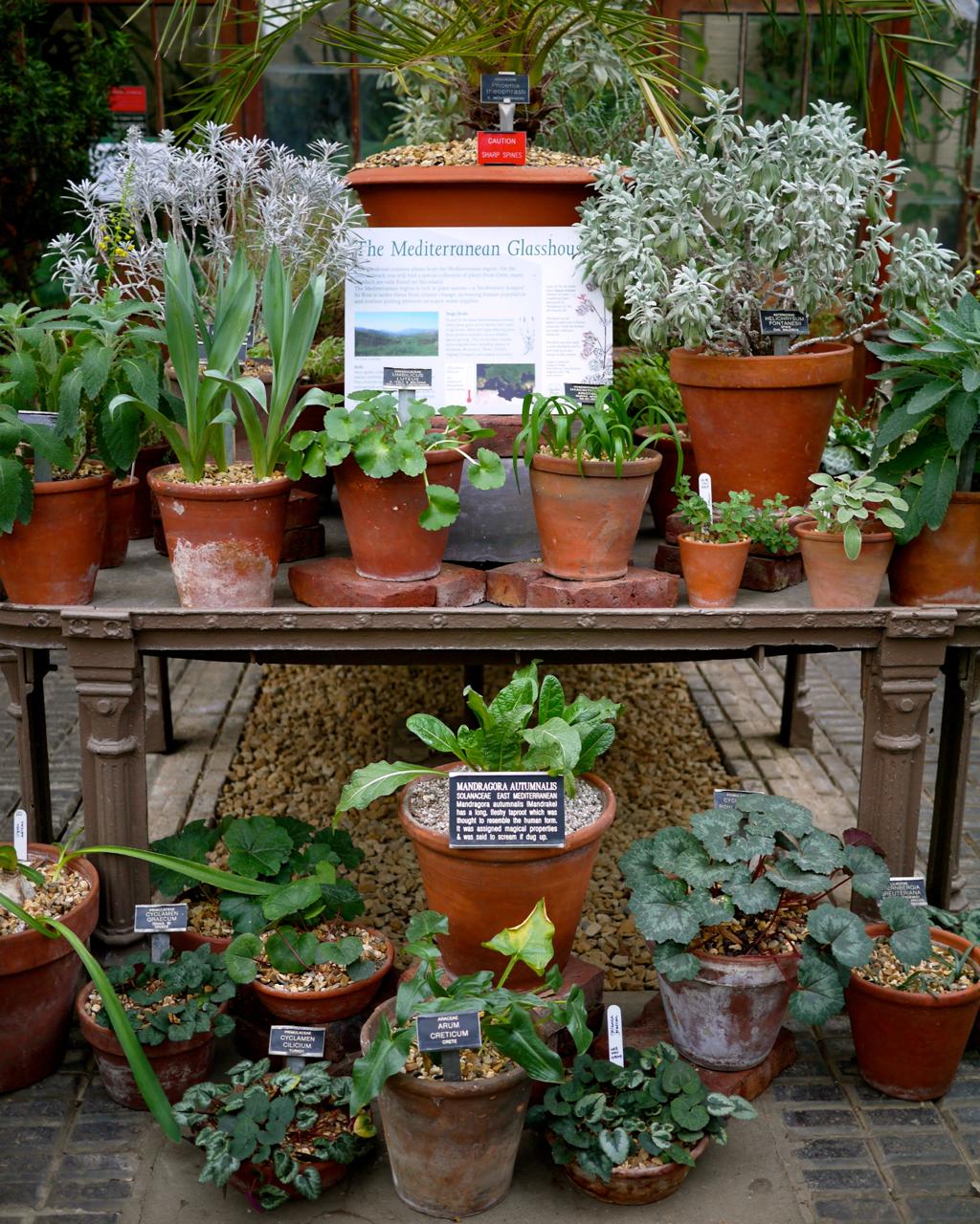 botonic garden | godsavethescene