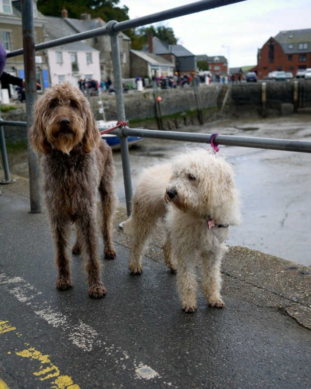 Padstow Doggies