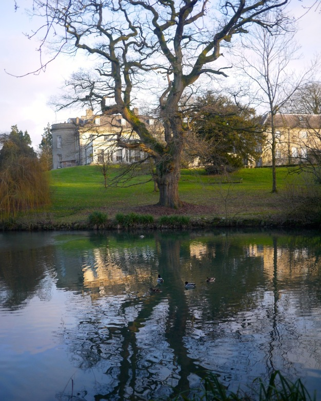 Babington House Backyard Tree Pond