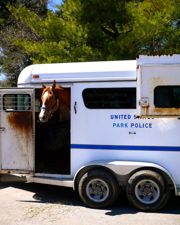 Washington DC United States Park Police Horse Trailer