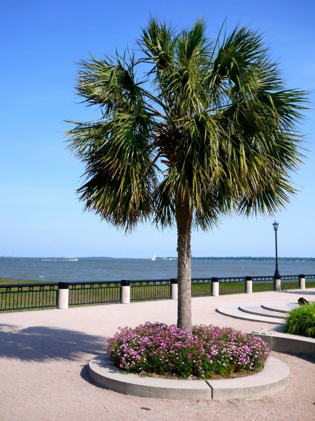 Charleston Palmetto Tree Harbor