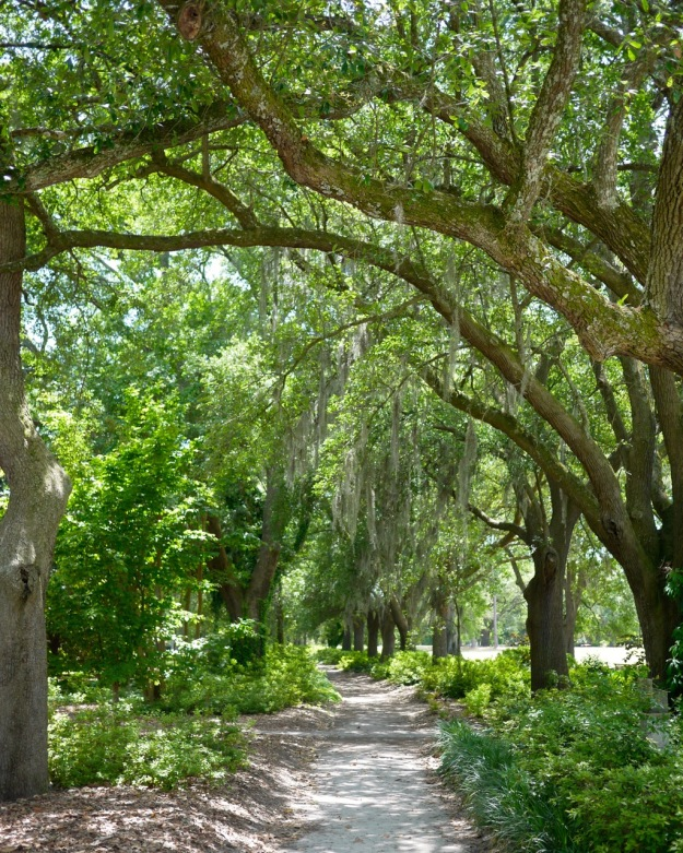 Hampton Park Charleston Path Moss