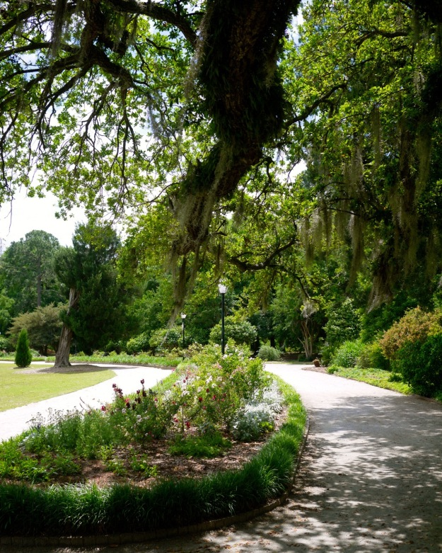 Hampton Park Flower Bed Spanish Moss