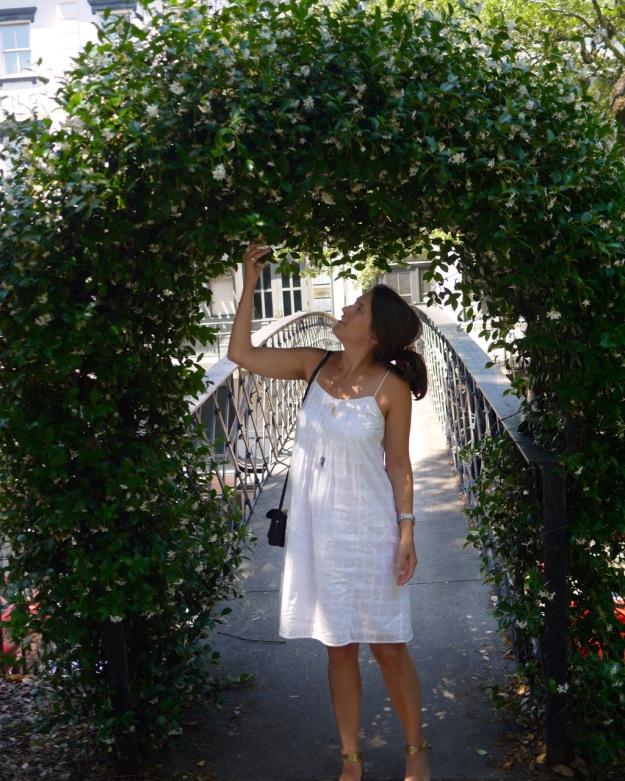 Savannah Jasmine Arch