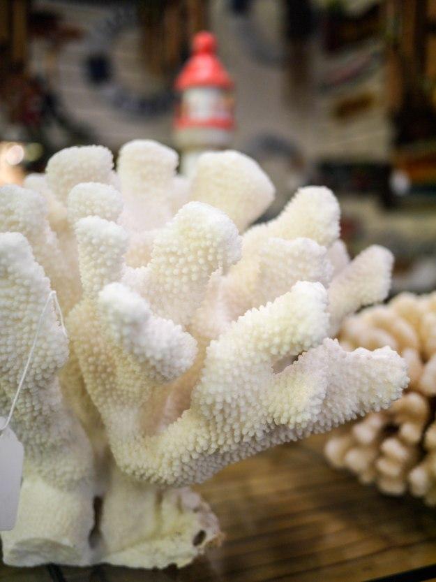 St Auguestine Coral Closeup