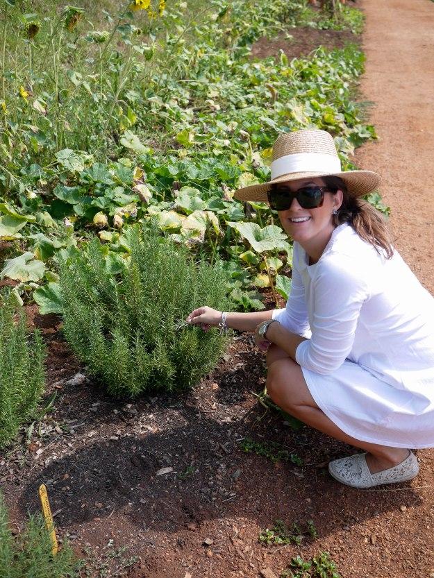 Monticello gardens rosemary