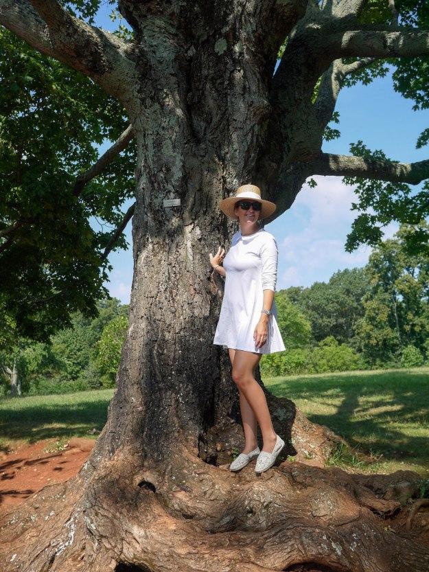 Monticello gardens tree