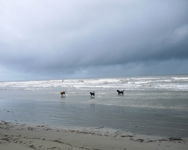 Hurricane Joaquin Sullivan's Island Flooding Beach Dogs