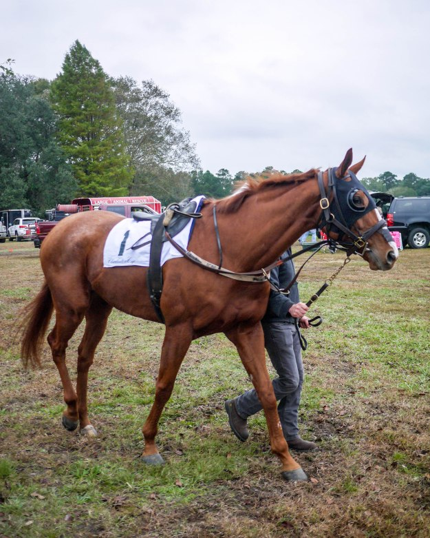 Charleston Cup 2015 Paddock Race Horse 1