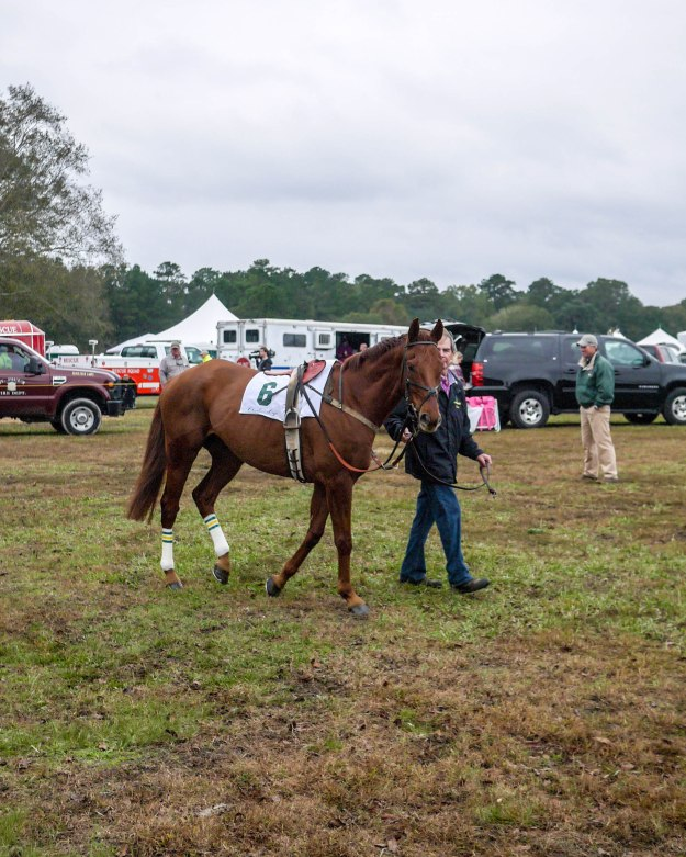 Charleston Cup 2015 Paddock Race Horses_