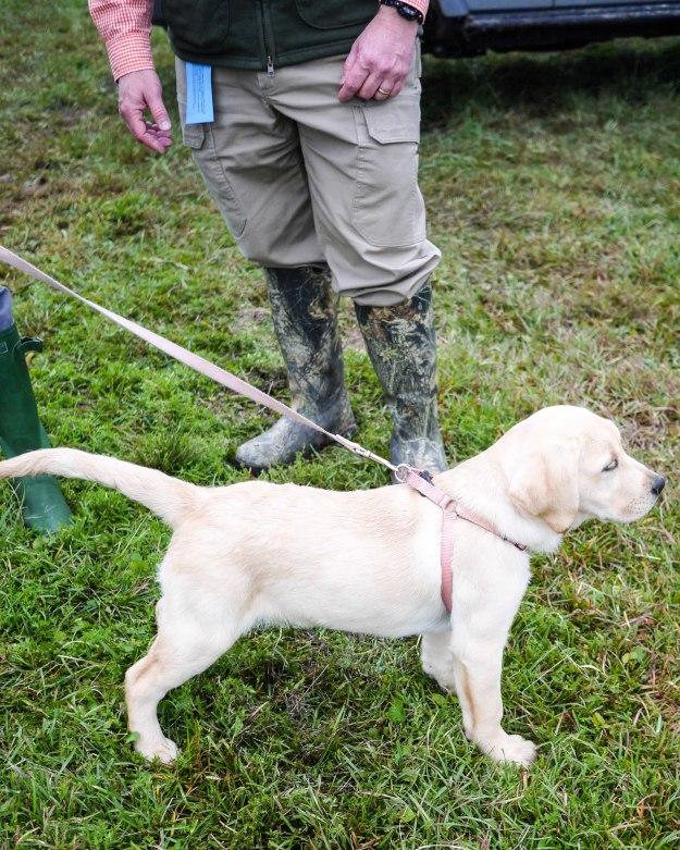 Charleston Cup 2015 Puppy