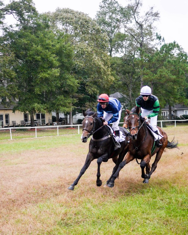 Charleston Cup 2015 Race Horses Close