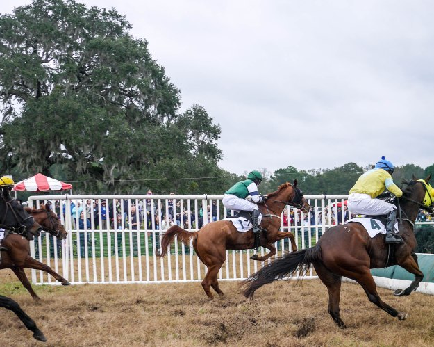 Charleston Cup 2015 Race Horses Jump Early