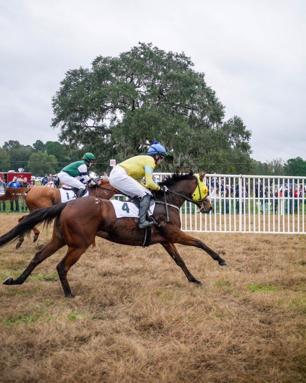 Charleston Cup 2015 Race Horses Run