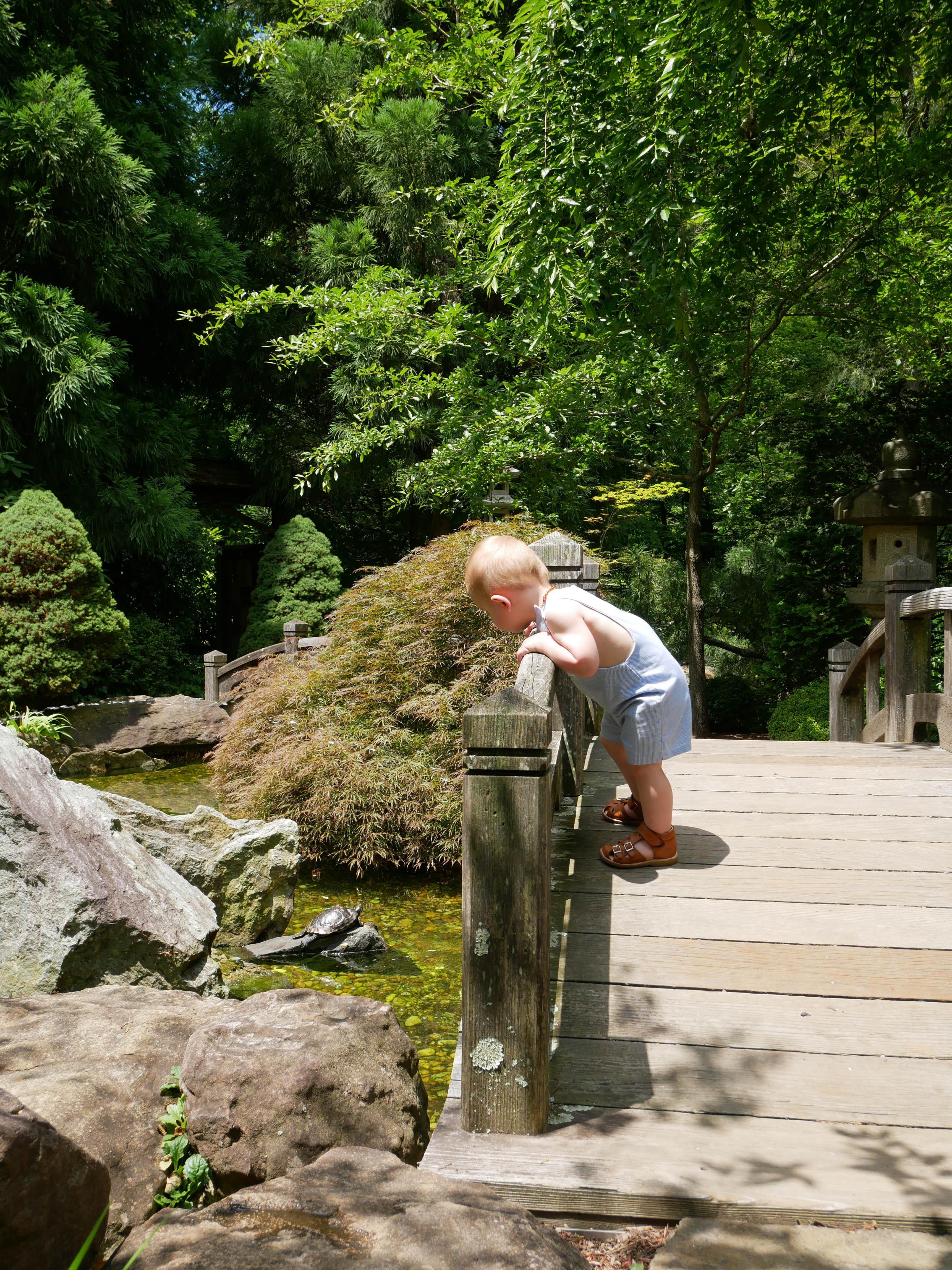Hillwood japanese garden bridge