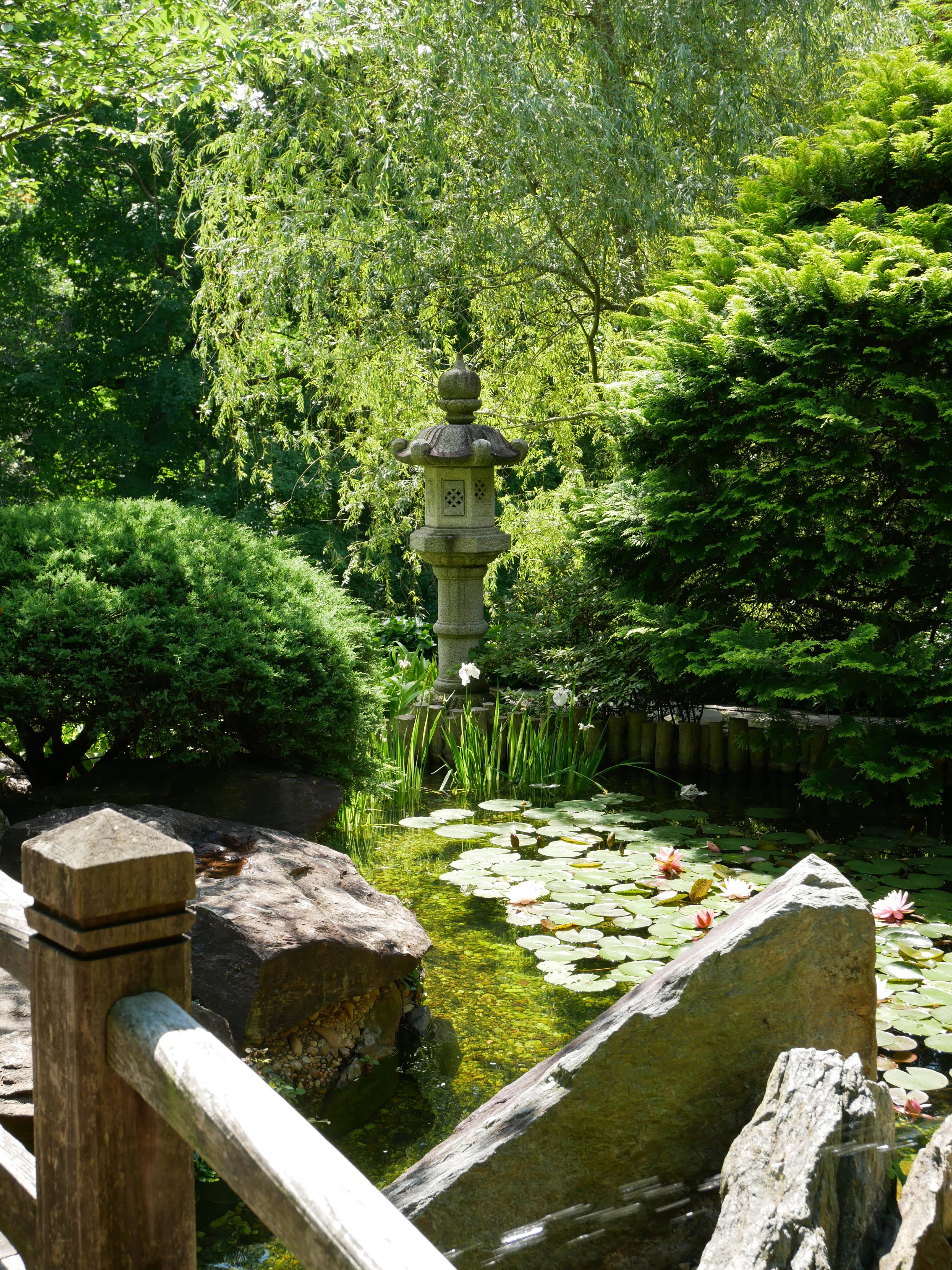 Hillwood Japanese garden lilypads